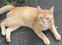 наглый рыжий кот.jpg