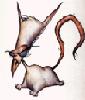 Bonemagic